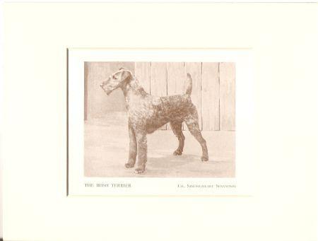 Kunstdruck - Irish Terrier Strongheart Sensation