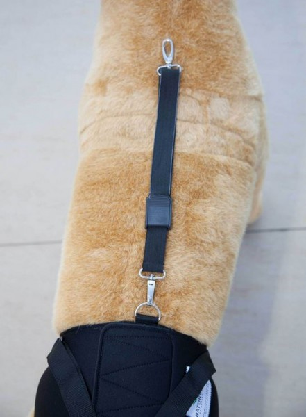 Sicherungsgurt für Tragehilfe Hund hinten