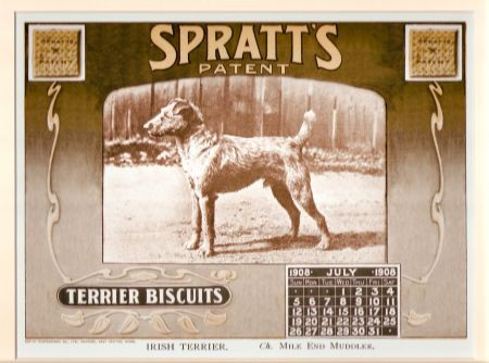 Kunstdruck - Irish Terrier Spratt's Biscuits