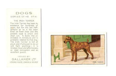 Galaher Ltd. - Irish Terrier Sammelkarte, original