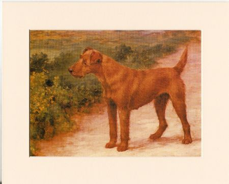 Kunstdruck - Lovely Irish Terrier