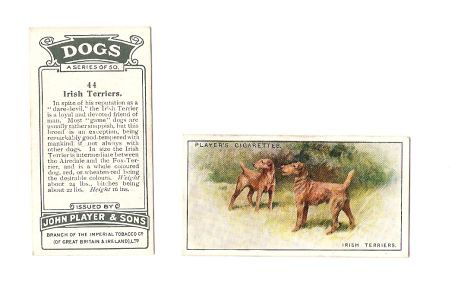 John Players - Irish Terrier Sammelkarte, original