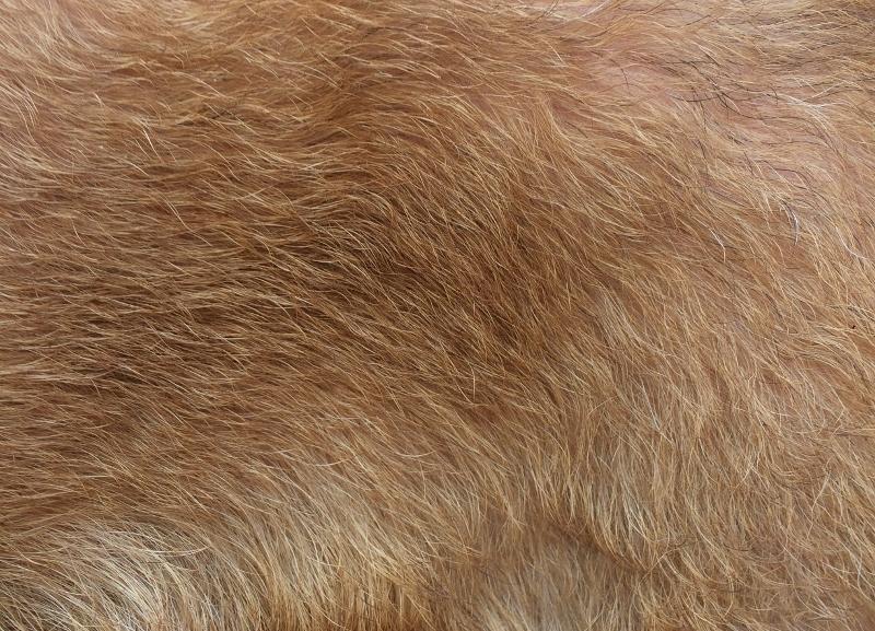 Terrier-trimmen-welliges-Fell-leichte-Unterwolle-2